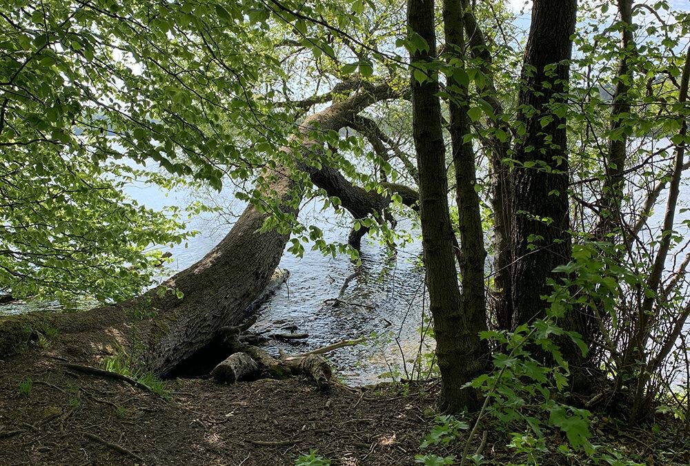 I skovens dybe stille ro…